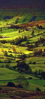 mk82-fall-field-green-mountain-nature-tree