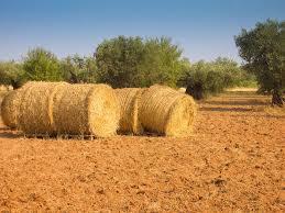 Resultado de imagen de agrarias