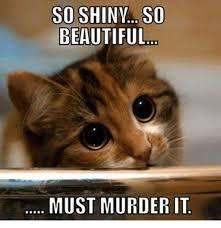 grumpy cat so beautiful. Modren Beautiful Beautiful Grumpy Cat And Murder SO SHINY BEAUTIFUL MUST Intended Cat So Beautiful U