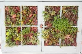 garden photo frames. Making A Vertical Garden Out Of An Old Window Frame Photo Frames