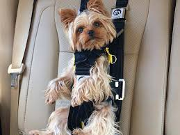 car seats car seat pillow pet belt cover best dog booster waterproof 2 in 1