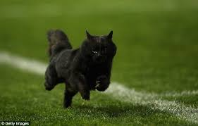 Image result for cats running