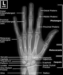23 Best Med Terminology Images On Pinterest | Anatomy, Nurses And ...
