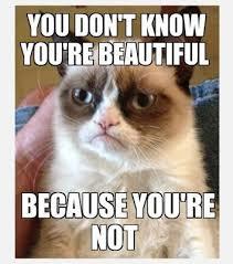 grumpy cat so beautiful. Modren Beautiful I Wouldnu0027t Be Speaking Grumpy Cat U0027cuz You Aint So Beautiful Either Bro Throughout Grumpy Cat So Beautiful I