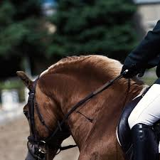 Horseback Riding Lessons - BM Equine | Groupon
