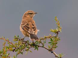 Resultado de imagen para pájaro canta enramada