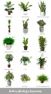 Great office plants Pinterest Great Indoor Plants For Beginners Katrina Chambers Plants Collage And Low Light Plants For Office Topaz Furniture Great Indoor Plants For Beginners Katrina Chambers Plants Collage