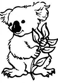 Small Picture Koala Bear Koala Bear On Eucalyptus Tree Coloring Page regarding