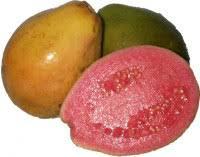 Реферат Экзотические плоды ru Экзотический плод гуава пришел к нам из Центральной Америки Этот фрукт был излюбленным лакомством инков и ацтеков Сладкие по вкусу плоды гуавы внешне
