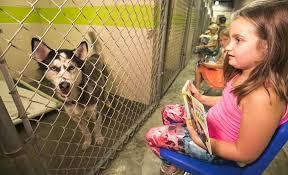 Doggone Good Reading - Ocala.com - Ocala, FL