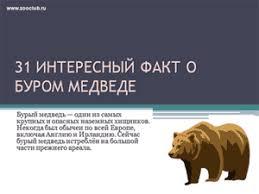 Школьные презентации скачать бесплатно скачать бесплатно  Бесплатно скачать презентацию 31 интересный факт о буром медведе