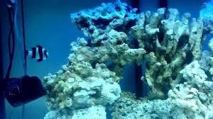 Acquario tropicale con rocce vive youtube