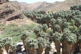 travelmarx indian canyons moorten botanical garden and palm springs aerial tramway