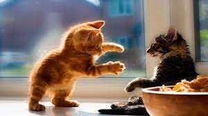 funny cats funny kittens