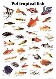 Tropical Fish Types Fish Breeds For Your Aquarium Adds