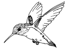 Small Picture Flying Magnificent Hummingbird Coloring Page kids crafts