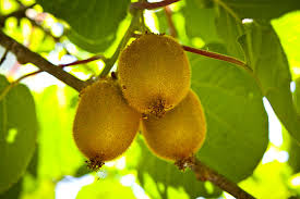 Grafting Ornamental Plants And Fruit TreesRHS GardeningHow To Graft Fruit Trees With Pictures