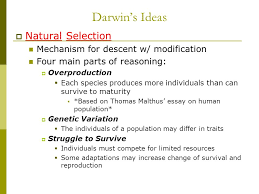 ch theory of evolution history of evolutionary thought  11 darwin s ideas  natural selection