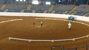 Horse Vaulting Bronze Freestyle - YouTube