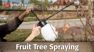 All About Growing Fruit Trees  Organic Gardening  MOTHER EARTH NEWSHomemade Spray For Fruit Trees