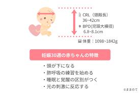 妊娠 30 週 胎児 体重