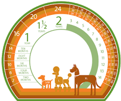 Dog Years Chart To Human Years Dogger Blogger Dog Age Comparison To Human