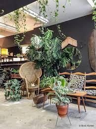 indoor jungle small spaces gardening