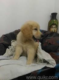puppy hyderabad