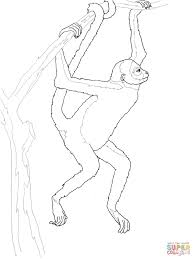 Small Picture Hanging Spider Monkey coloring page Free Printable Coloring Pages