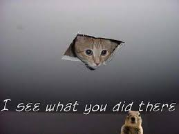 squirrel in ceiling. Beautiful Squirrel I See What You Did There Cat Cat Small To Medium Sized Cats Whiskers Fauna  Inside Squirrel In Ceiling U