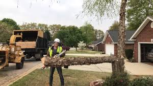 Tree Risk Assessment In Duncan South Carolina By American