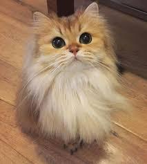 Happy <b>cat</b> likes the dollar today, <b>euro</b> drops a bit! | Fluffy <b>cat</b>, <b>Cute</b> ...