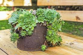 Full Image for Unusual Pot Plants 16 Nice Decorating With Creative  Containers For Succulents ...