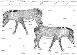 Or else, do online coloring directly from your tab, ipad or on our web feature for this sweet little zebra coloring page. Free Printable Zebra Coloring Pages For Kids