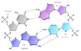 Nucleic Acids Biology Libretexts