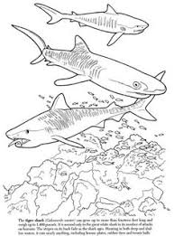 Small Picture Sailfish Coloring Pages Pinterest