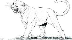 lion for coloring mountain coloring page mountain lion coloring page mountain lion coloring pages puma cougar