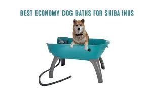 best dog bath tubs for shiba inus small medium dogs