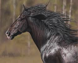 equine painting the black horse by terry kirkland cook