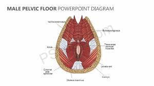 male floor powerpoint diagram