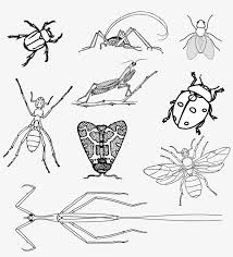Come check out critter squad's insect coloring pages! Insects Bugs Beetle Realistic Bugs Coloring Page Transparent Png 1216x1280 Free Download On Nicepng