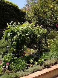 David Burke Kitchen The Garden Garden Inspiration Robinson Gardens Velvet Linen