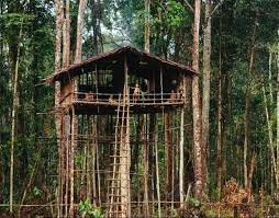 Back To The Stone Age Encounter With Primitive Tribe Brings Cos Korowai Treehouse
