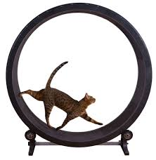 meow town mdf litter box. One Fast Cat Exercise Wheel Meow Town Mdf Litter Box E