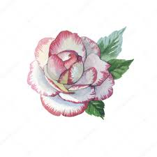 тату акварель цветы уайлдфлауэр роза цветок тату в акварельной