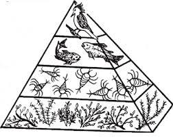 food web pyramid succession and foodwebs global lab
