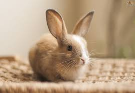 How Much Does It Cost To Keep A Pet Rabbit?