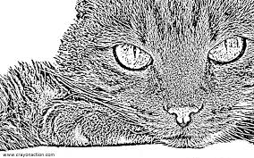 Small Picture Cat Face Coloring Page Crayon Action Coloring Pages