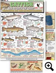 Catfish Chart How To Identify Freshwater Species Shad Perch Walleye