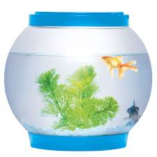fish tank for office. Picture 2 Of Fish Tank For Office